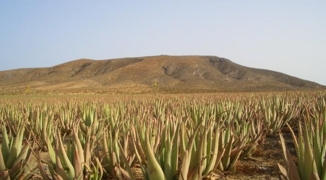 Cosa vedere in una vacanza a Fuerteventura