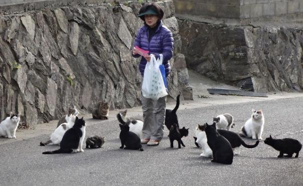 Due isole governate dai gatti in Giappone