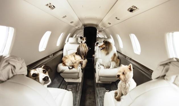 Le 27 compagnie aeree che accettano animali domestici