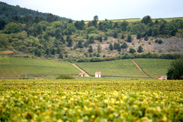 France – Food & Wine Holidays in Europe